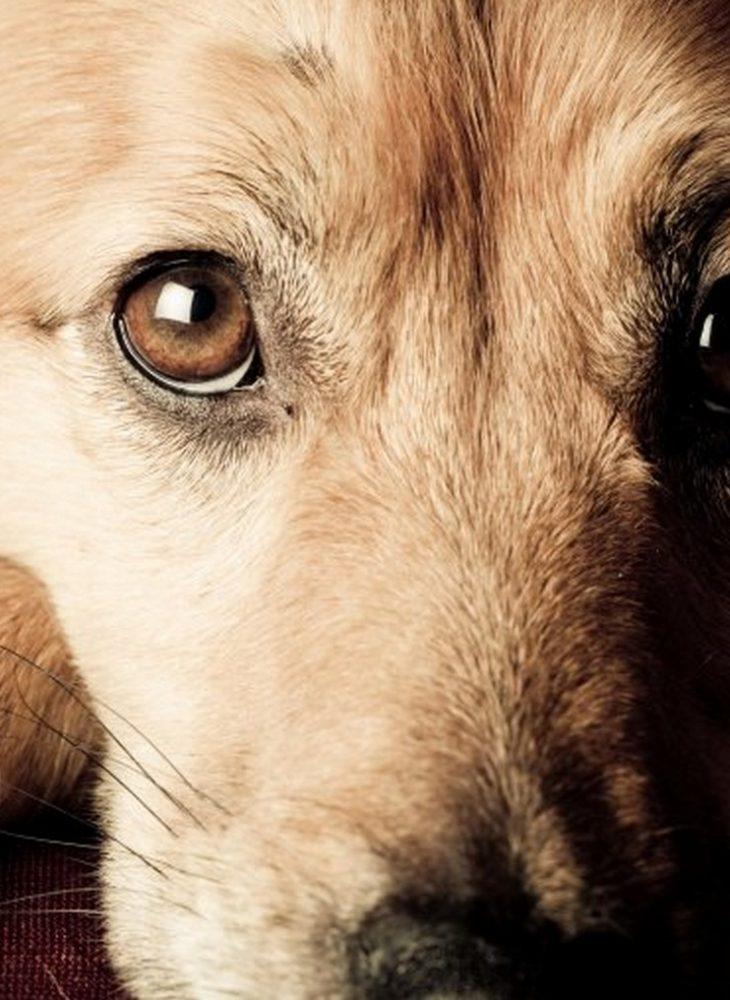 dog-empath